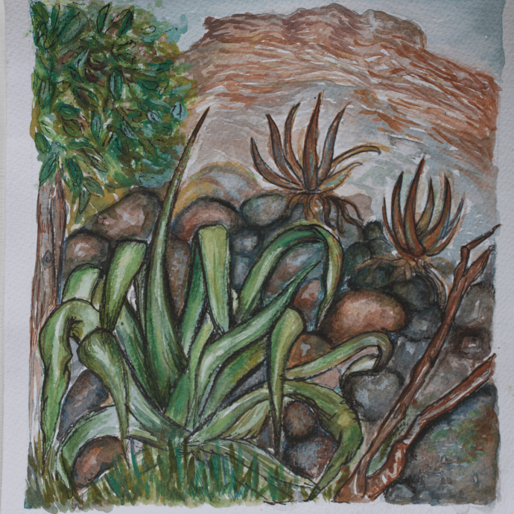 'Agave' Watercolor on Paper: $75